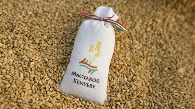 Magyarok Kenyere - Összeöntötték a búzát a gazdák