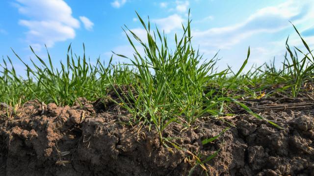 Minden növényvédelmi gépnek túl kell esnie a műszaki felülvizsgálaton