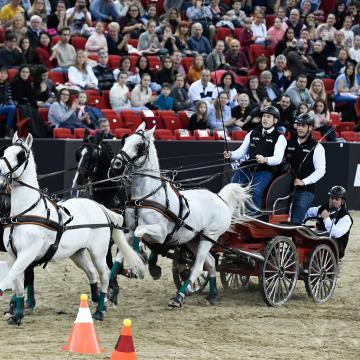 Megbokrosodott lovak miatt többen megsérültek a szajoli fogathajtó versenyen