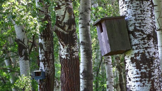 Nyilvántartást készít az idősödő fákról a Budapesti Erdészet