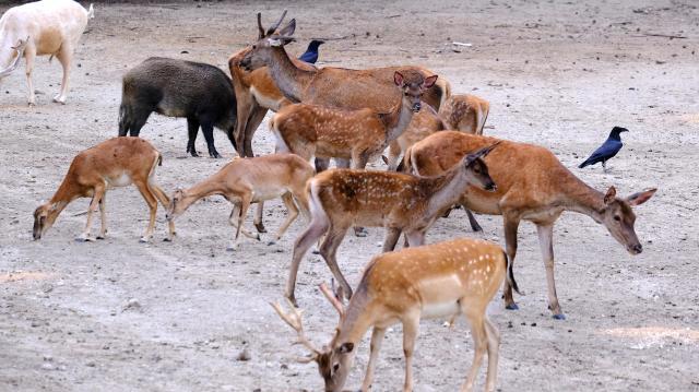 A vadállományt nem veszélyezteti a jogszerű vadászat