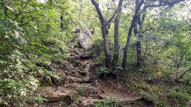 Bővült az erdőtelepítések támogatása