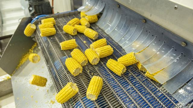 Kevesebb kukorica terem az idén