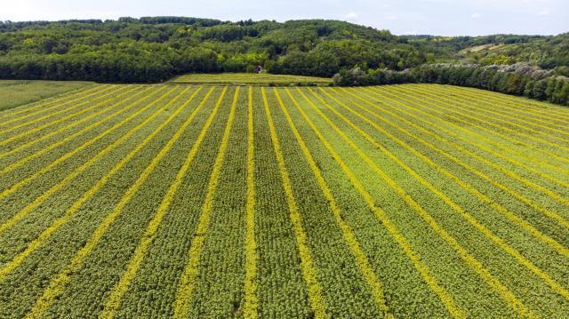Korszakváltást jelent a digitális agrárstratégia