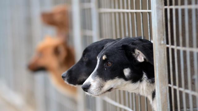 Támogassuk a kutyamenhelyeket!