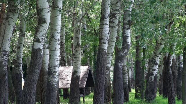 Több forráshoz juthatnak az erdőt telepítő gazdák