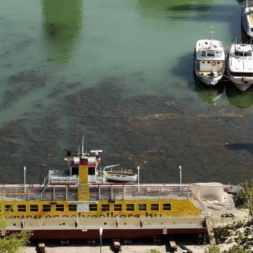 Ez okozta az algásodást a Balatonban