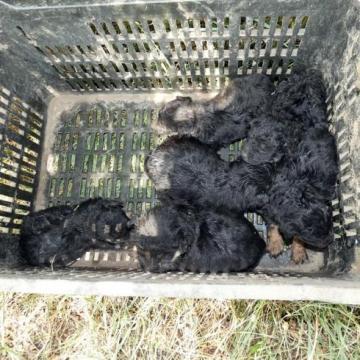 Hat kiskutyát hagytak a menhely előtt, állatkínzásért felelhetnek