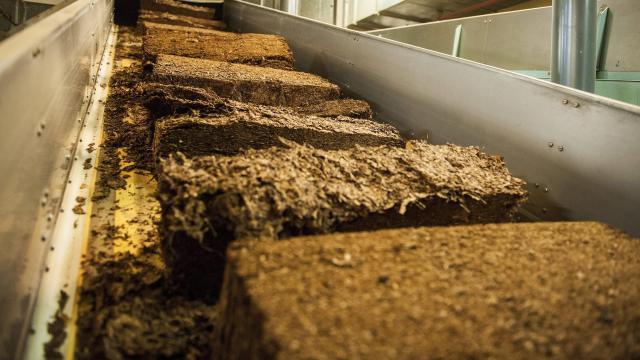 Nem érinti a pécsi üzemeket a British American Tobacco leépítése