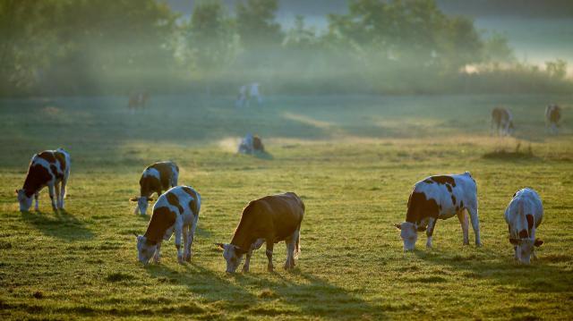 Támogatásokkal segítik a magyar állattenyésztők versenyképességét
