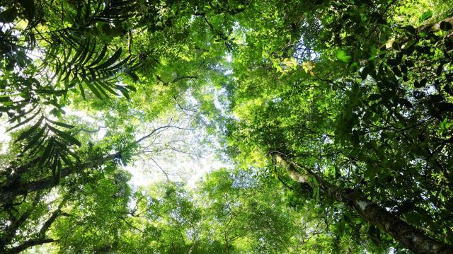 Az Agrárminisztérium növelte az erdőtelepítésre adható támogatás mértékét