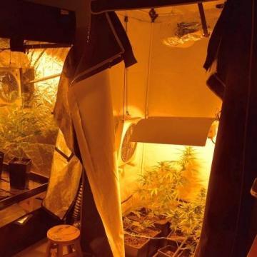 Kannabiszültetvény találtak Ágfalván