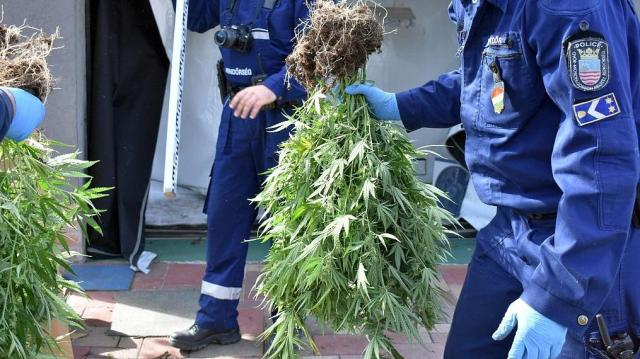 Rendőrkézen egy marihuána-ültetvény termesztő