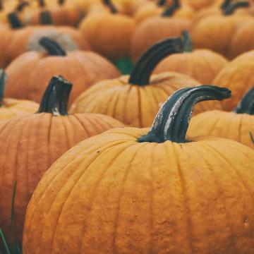A halloweeni és a sütőtök közti különbségre hívják fel a figyelmet
