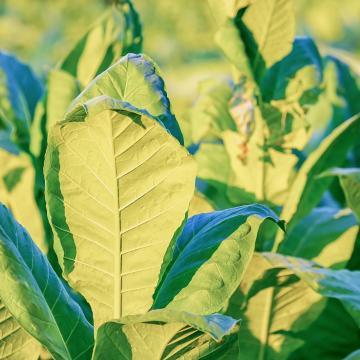 A kormány elkötelezett az agrártámogatások megóvása mellett