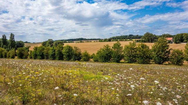 Egy eddig szinte ismeretlen inváziós fűfaj terjed Magyarországon