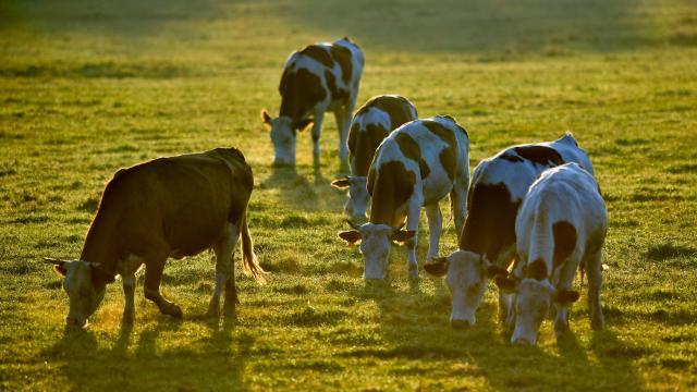 A baromfi- és húsmarha-támogatások javítják az agrárium teljesítményét