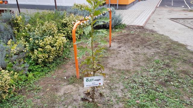 Fát ültettek a környezetvédők