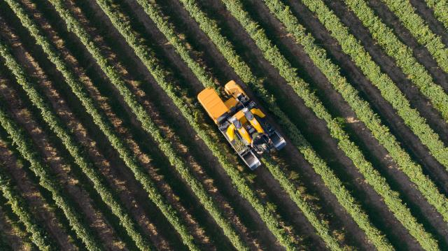 A külkereskedelmi többlet több mint felét az agrárium adja az idén