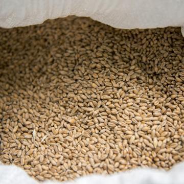 Adócsaló komáromi gabonakereskedők ellen emeltek vádat