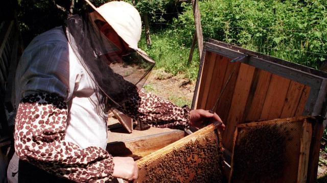 Nagy István: 2020-tól 25 százalékkal több támogatást kapnak a méhészek
