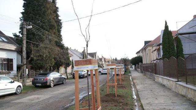 Új fák ékesítik a Kassa utcát