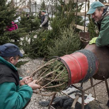 Évente 10-12 milliárd forintot tesz ki a belföldi fenyőfaforgalom