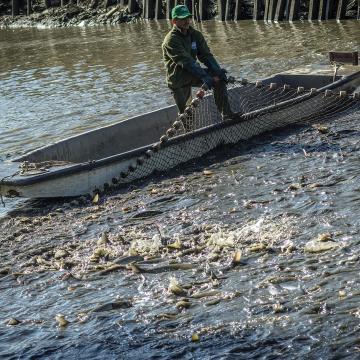 Téli lehalászás a Hortobágyi Halgazdaságban