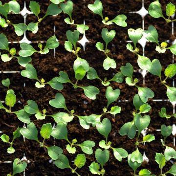 Új stratégiát dolgoztak ki a gyógynövényipar fejlesztéséért