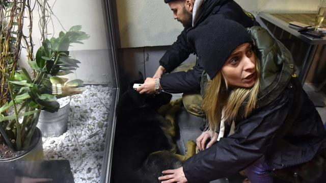 A szilveszteri petárdázás veszélyeire figyelmeztetik a kutyatartókat