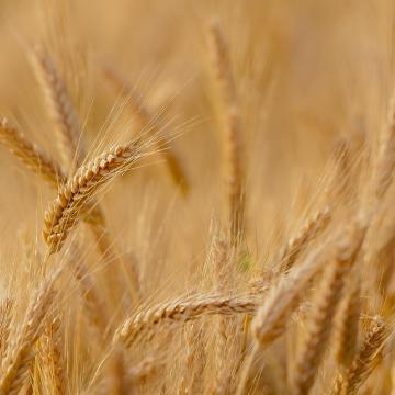 Fejlődési pályán van a magyar mezőgazdaság