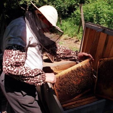 Jelentősen emelkedik a méhészek és a haszongalamb-tartók támogatása az idén