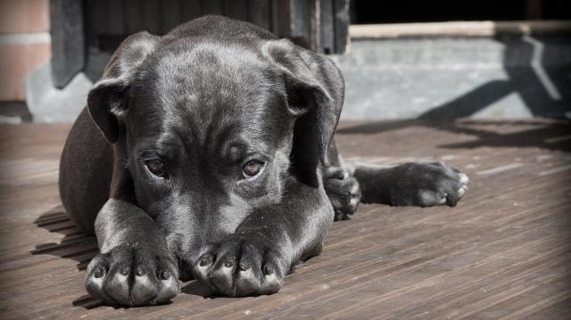 Petárdastopot kérnek az állatvédők szilveszterre
