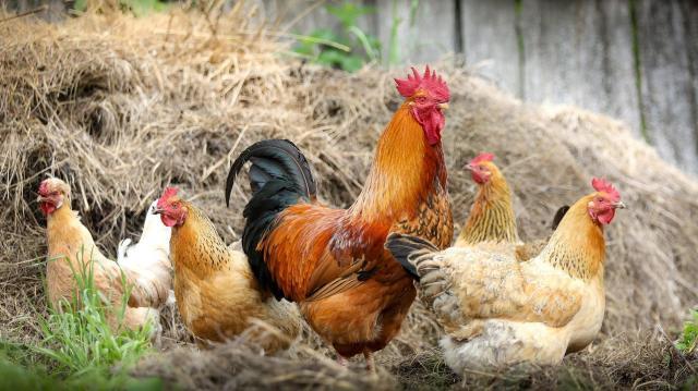 További támogatások vidékfejlesztésre és az agrárium megerősítésére