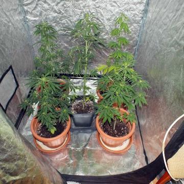 Kábítószergyanús ügy