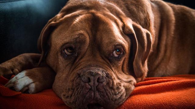 Otthon hagyott kutyáknak készült lejátszási lista