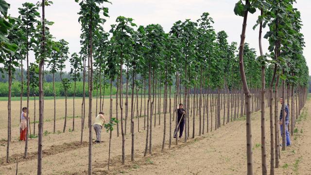 Lendületben az erdőtelepítések