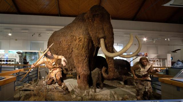 Örömmel fogadjuk az új természettudományi múzeumot