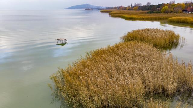 Megkétszereződött a kiirtott nádasok területe a Balatonnál