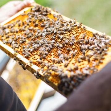 Méhcsaládonként ezer forintnyi támogatást kaphatnak a méhészek