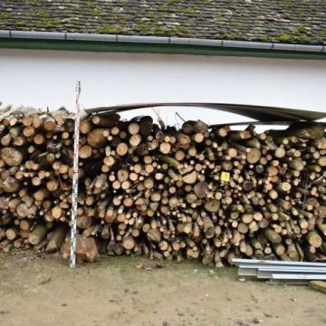 Nagy mennyiségű fát lopott