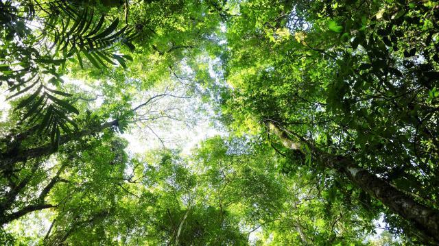 Újabb hétmilliárd forint támogatás erdők létesítésére
