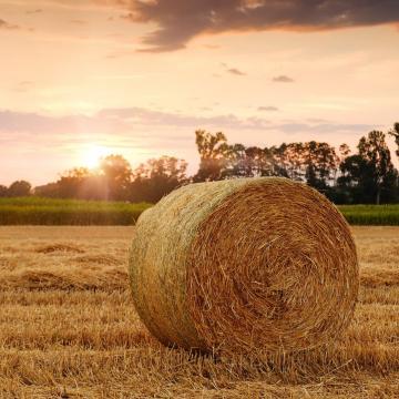 Az agrártámogatások kifizetésével segítik a gazdálkodókat