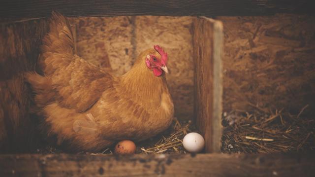 Nem befolyásolja a húsvéti tojásokat a járvány