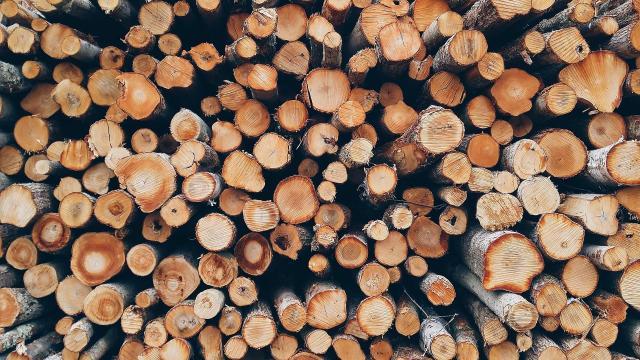 Már regisztrálhatnak az erdőgazdálkodók, tűzifa-értékesítők az online piactérre