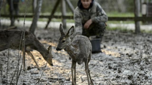 Támogatói jegyekkel próbálja átvészelni az időszakot a Tisza-tavi Ökocentrum