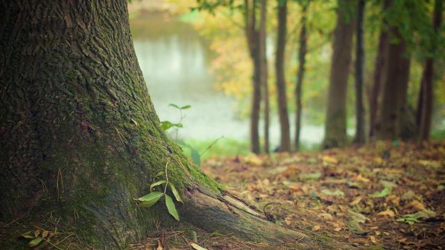 Újabb kormányzati lépés a magyar erdők fejlődéséért