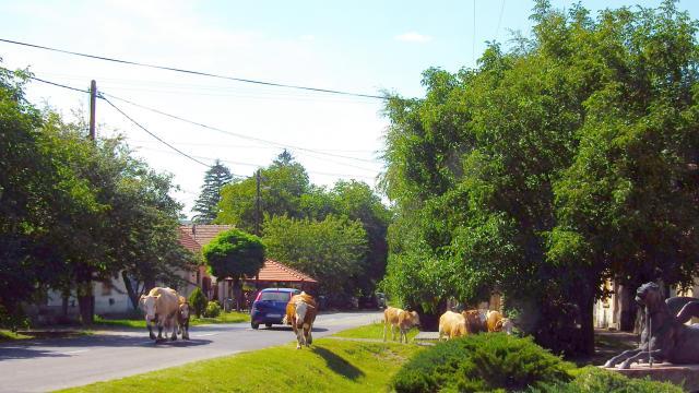 Újabb pályázatok nyíltak meg a Magyar falu programban