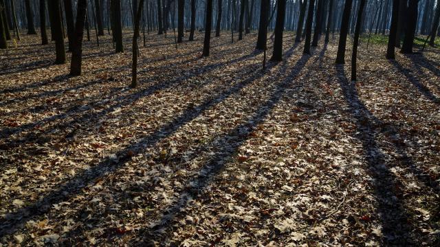 Az Erdő álma címmel hirdettek szépirodalmi pályázatot