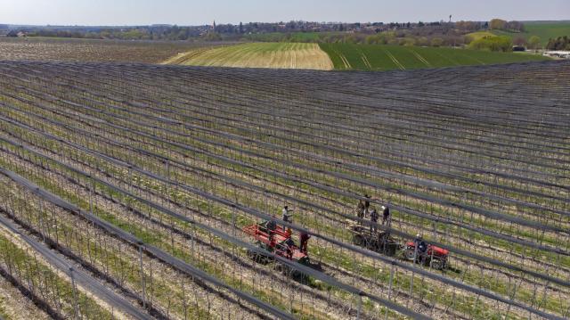 Rengeteg ültetvényt sújtott tavaszi fagykár